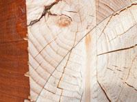 עץ גושני למכירה
